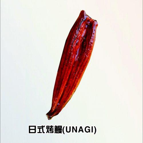 单条鳗鱼图片