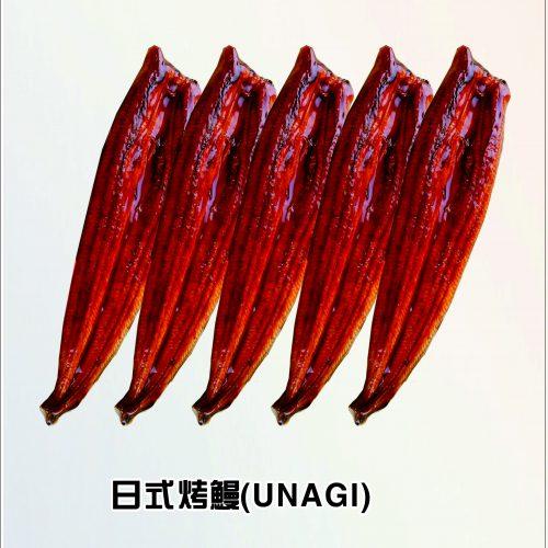 5条鳗鱼图片